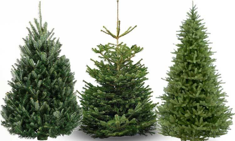 Kerstboom Kopen Baarn.Kerstboom Kopen En Online Bestellen Johan Kerstboom